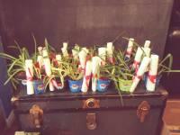 Plantes arraignées: symbole de l'ACA en Estrie!
